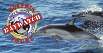 Baywatch logo possibility